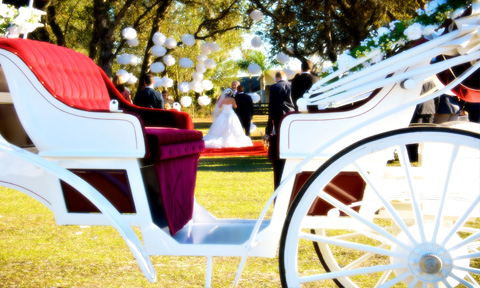 Horse Drawn Carriage for Indian Wedding